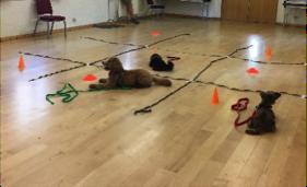 puppy classes tilehurst